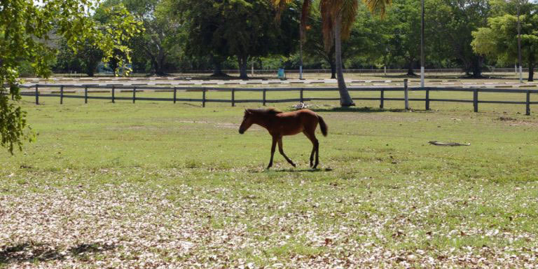 Young colt strolls away to find Mom